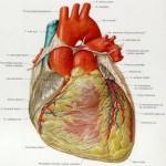 Tips lemak dan jantung