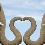 Kasih Sayang Binatang Mengalirkan Air Mata